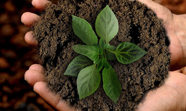 Green plant in earth being held in two hands