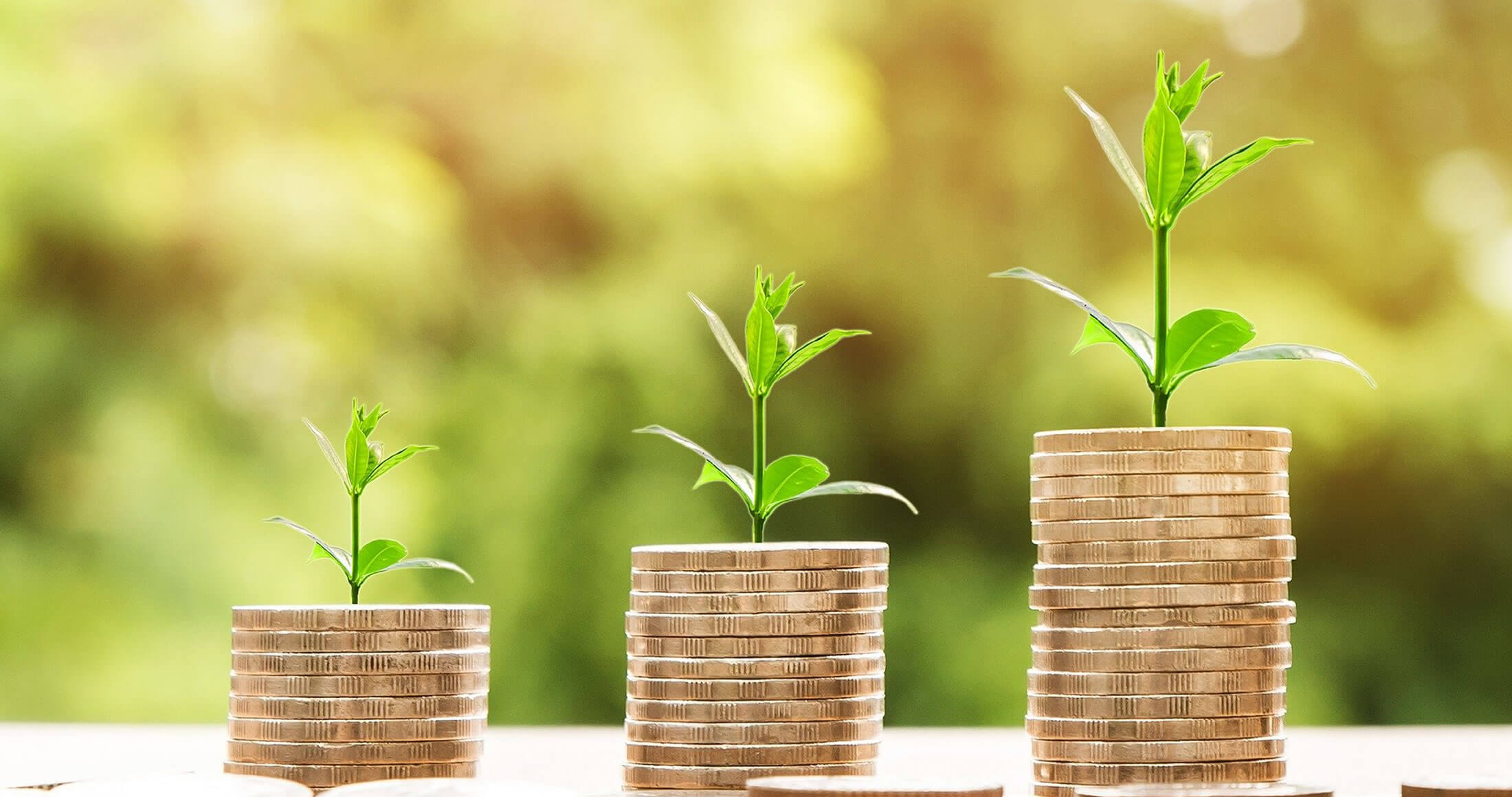 Image of money and plant growth